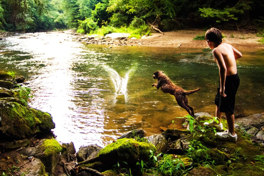 Enfants jouant avec deux chiens